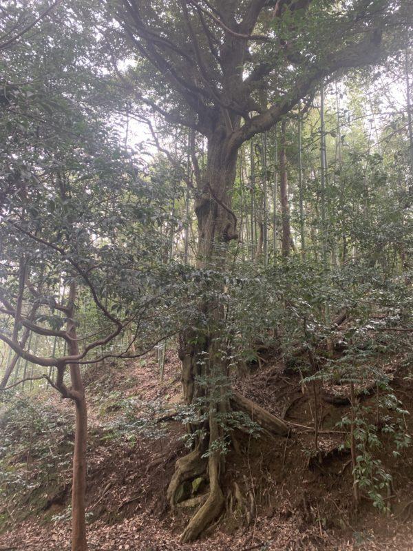 日吉神社10
