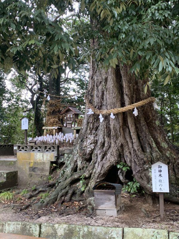 揖屋神社13